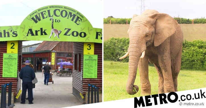 Elephant killed in his sleep by another male at UK zoo