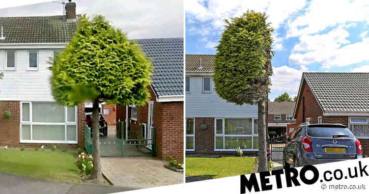 Neighbour cuts tree in half in petty row to stop it hanging over his drive