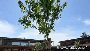 Rabastens. Las Peyras : l'arborisation habillée dans la cour de récré - ladepeche.fr