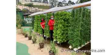 Sodexo: Fazenda Urbana de Paraisópolis produziu mais de 500kg de hortaliças