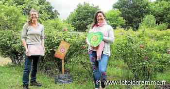 Exposition de peinture dans les jardins de Chemin de Traverse à Kermoal - Le Télégramme