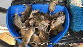 Mouse 'napalm' knocked back by authorities - Illawarra Mercury