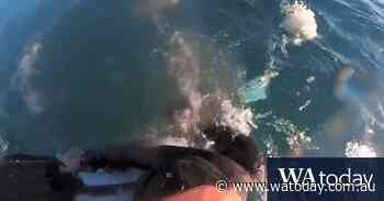 Bodyboarder has close call with shark on the Mornington Peninsula - WAtoday