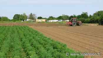 A Cormeilles-en-Parisis, une plaine maraichère en projet pour servir de «rempart» à l'expansion urbaine - Le Parisien