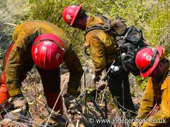 Firefighting monks line up to battle raging wildfire on Big Sur