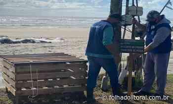 Guaratuba realiza campanha contra o descarte irregular de redes nas praias - Folha do Litoral News