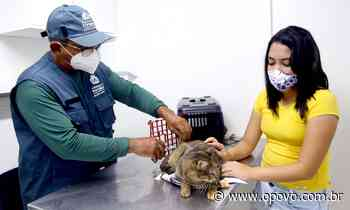 Atendimento veterinário gratuito em Fortaleza; saiba onde solicitar - O POVO