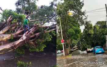 Derribó tormenta más de 10 árboles en Tepic - Meridiano.mx