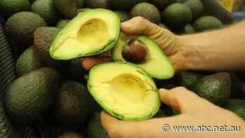 Avocado prices are cheap, but they could soon be even cheaper