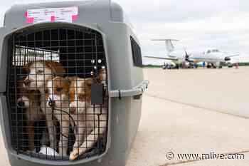 Around 140 dogs and cats arrived at West Michigan Regional Airport on Wednesday, June 23, 2021. The animals traveled from overcrowded shelters in Louisiana. About 11 shelters from across Michigan participated in the rescue effort. - MLive.com