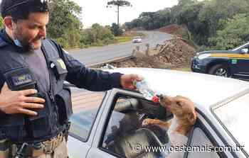 VÍDEO: Cães deixados em veículo acidentado recebem água e comida em Faxinal dos Guedes - Oeste Mais