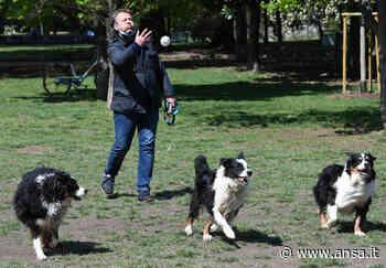 Bomba a mano trovata in un'area cani a Milano - Agenzia ANSA
