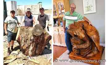 Maple stump becomes giant keepsake for U of Guelph prof:TV chainsaw carvers recruited to transform into gryphon statue