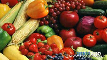 Nutrire Trento, una comunità a supporto dell'agricoltura: aperta a nuove adesioni - TrentoToday
