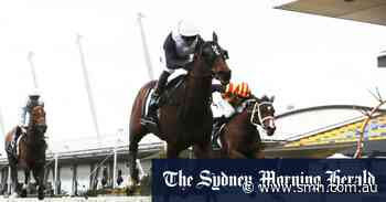Smith finds sweet spot with veteran stayer