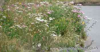 'A complete mess' and 'absolutely beautiful' - Verdict on Solihull's wild verges - Birmingham Live