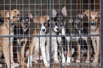 Rifugio per cani ad Andria: approvato progetto di fattibilità per candidatura a fondi ministeriali - Andria news24city