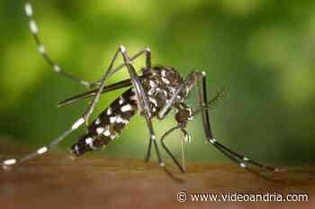 Ad Andria interventi contro zanzara tigre e derattizzazione - VideoAndria.com