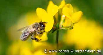 Slowenischer Bienenstock für den Park der Villa Reitzenstein