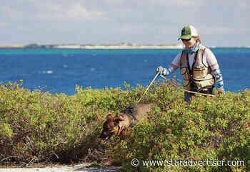 U.S. Fish and Wildlife Service eradicates yellow crazy ants from seabird wildlife refuge