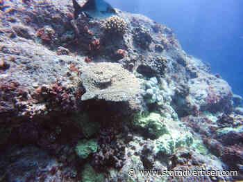 Hōkūleʻa, Hikianalia crews conduct underwater survey of Lalo coral reefs