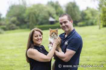 Ginger cat comforts grieving families at Eastham burial ground