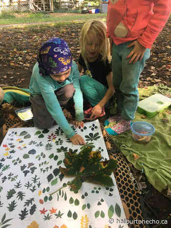 Parents write letters to TLDSB advocating for forest school - Haliburton County Echo