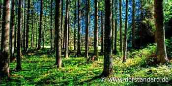 Run auf den Tann: Ein Wald gegen das schlechte Gewissen - DER STANDARD