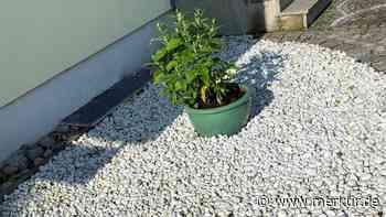 Hallbergmoos: Statt Steine und Schotter mehr Grün in den Gärten - Merkur Online