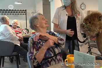 Ontmoet Stan, Basiel en Tuur: professionele rusthuisalpaca's
