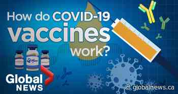 How COVID-19 vaccines work as young adults in Quebec remain hesitant to get jab - Global News
