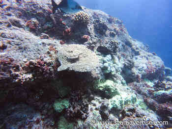 Hokule'a, Hikianalia crews conduct underwater survey of Lalo coral reefs