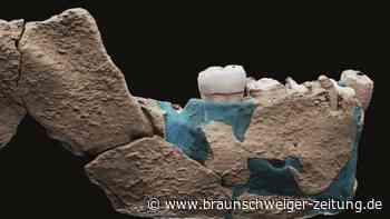 Knochen eines bisher unbekannten Urmenschen gefunden