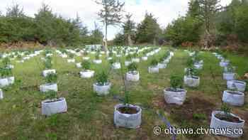 OPP seize 2000 cannabis plants in eastern Ontario grow up bust - CTV Edmonton