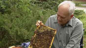 More honeybees won't save wild ones, say Calgary beekeepers