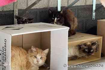"""Kattenstad zoekt baasjes op West-Vlaamse platteland voor tientallen verwaarloosde boerderijkatten: """"Verwacht geen kopjes of aaitjes"""" - Het Nieuwsblad"""