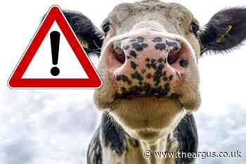 Sussex countryside walkers and farmers warned about cattle