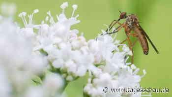 Bundestag beschließt besseren Schutz für Insekten
