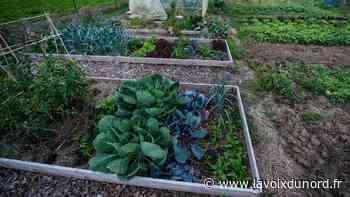 Nieppe : l'eau et l'occupation par des gens du voyage au cœur des débats chez les jardiniers - La Voix du Nord