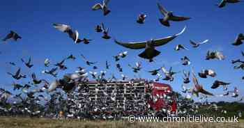 Thousands of pigeons disappear during race from Peterborough to the North East