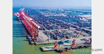 Covid outbreak at Chinese ports further hit global shipping operations - hortidaily.com