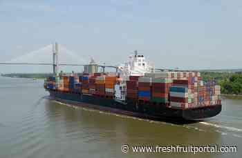 """Leaked EU shipping emissions policy draft deemed a """"disaster"""", NGO says - Fresh Fruit Portal"""