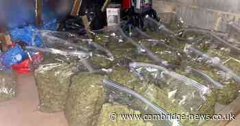 Cambs officers uncover cannabis factory and drugs worth up to £500,000