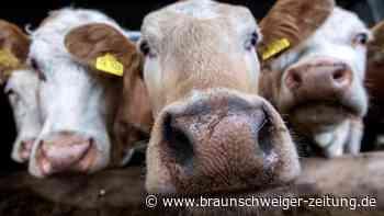 Aldi setzt auf Fleisch aus tiergerechterer Haltung