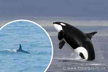 'Killer whales' spotted off coast of Brighton