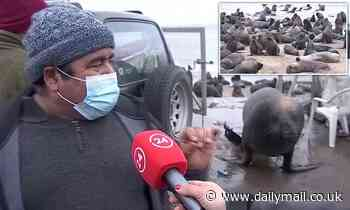 Sea lion crashes Chile fisherman's interview about 'plague of sea lions'
