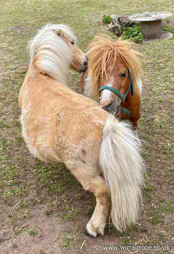 Wirral horse charity's urgent appeal for help as debts spiral - Wirral Globe