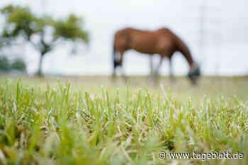 Unbekannter misshandelt Pferde in Drochtersen - Blaulicht - Tageblatt-online