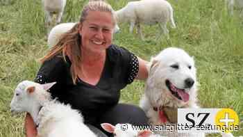 Hobbyschäfer in Liebenburg vertrauen drei Schutzhunden - Salzgitter Zeitung