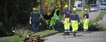 La protezione civile di Usmate Velate mette in sicurezza la Cassinetta - Il Cittadino di Monza e Brianza